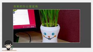 自制的办公室盆栽